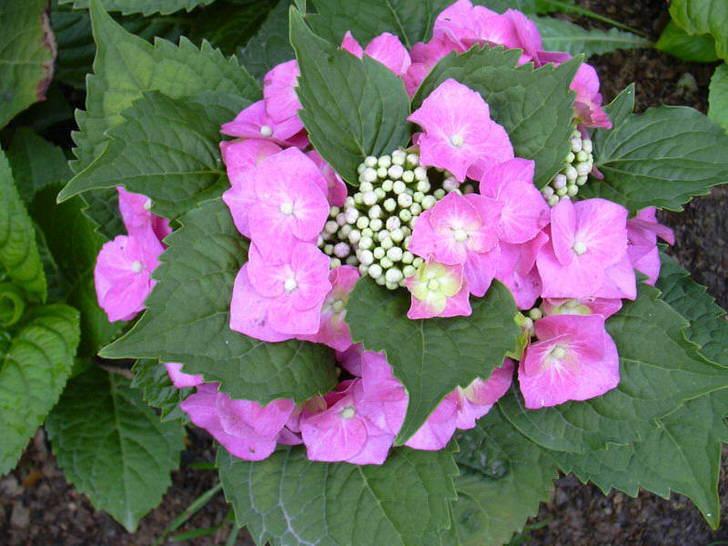 Красивые цветы для стильного сада.