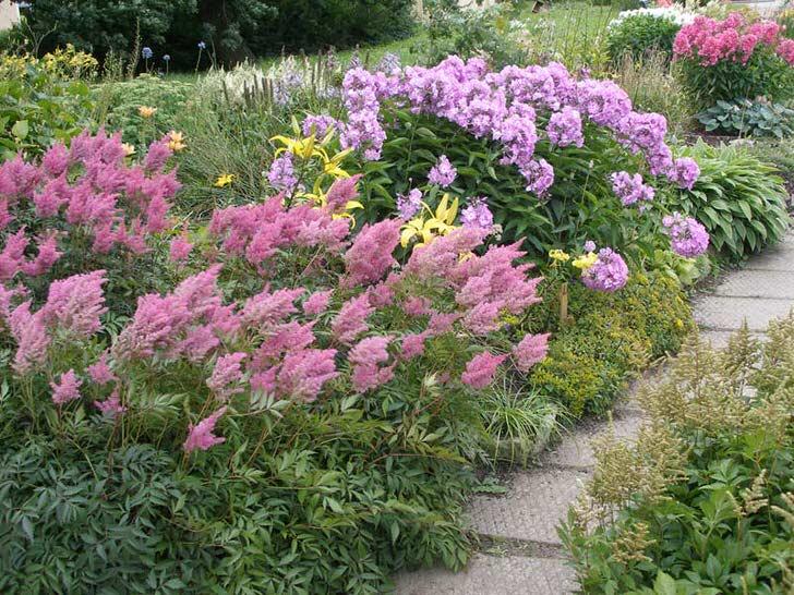 Астильба высажена вдоль садовой дорожки.