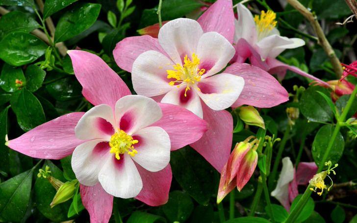 Нежные цветы в саду