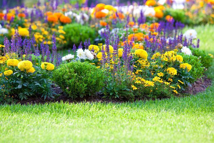 На одной клумбе высажены многолетники разных цветов. Желтые, оранжевые и фиолетовые бутоны выгодно сочетаются на одном участке.