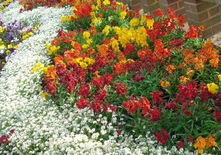 На клумбе из многолетников сочетается большое количество цветов. Все зависит только от фантазии дачника, который работает над оформлением двора.