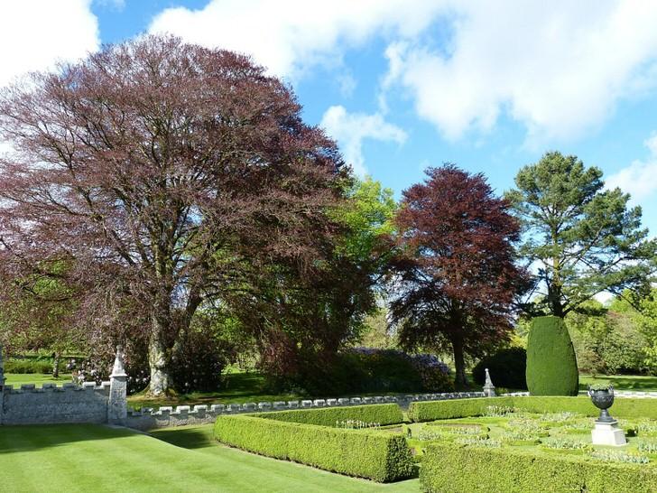 Сад в стиле модерн с низкими стриженными кустарниками.