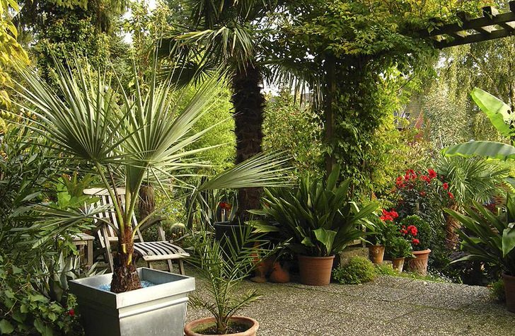 Пергола, обвитая виноградом, создает тень, в которой обустроено небольшое место для отдыха в средиземноморском стиле.