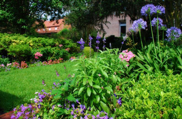 Английский газон подходит для организации ландшафтного дизайна на маленьких и больших площадях. Элегантное украшение любого двора.