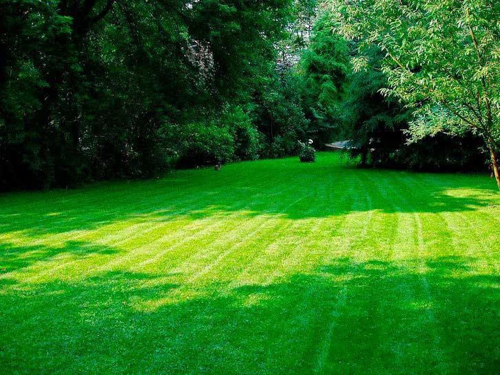 Английский газон в саду на западе Испании.