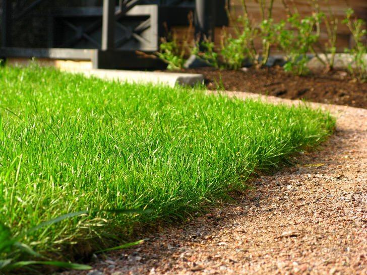 Английский газон поражает своей красотой. Насыщенный цвет зелени великолепно дополняет любую ландшафтную композицию.