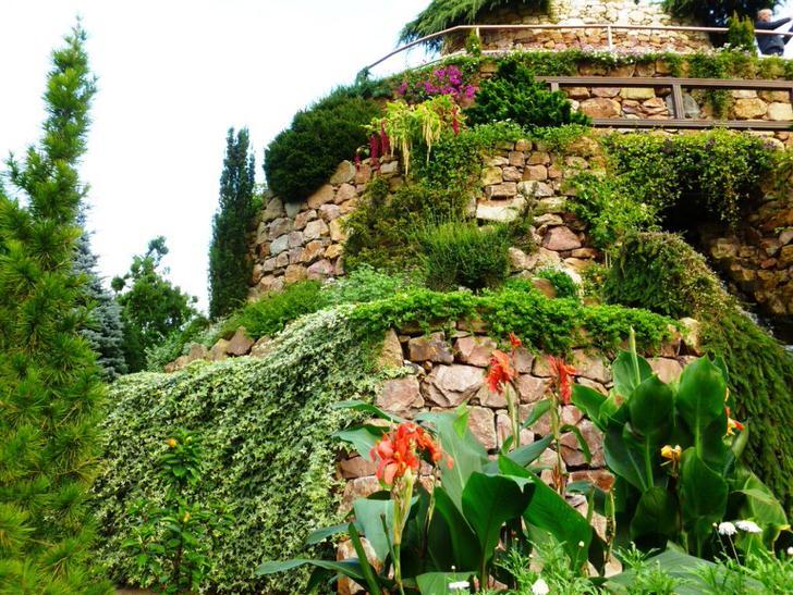 Массивные, искусственно созданные склоны из искусственного камня усажены виноградом.