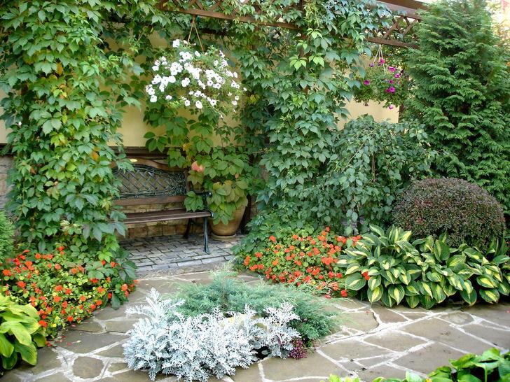 Многообразие растительного мира во внутреннем дворике свидетельствует о наличии средиземноморского стиля. Цветущие растения, вьющийся дикий виноград делают атмосферу романтической.