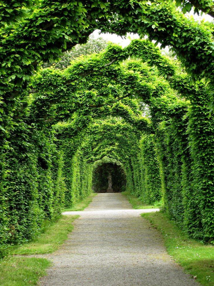 Трёхсот летняя живая арка из самшита резиденции клана Росс - замок Бирр, Ирландия. Это то, что нельзя купить за деньги.