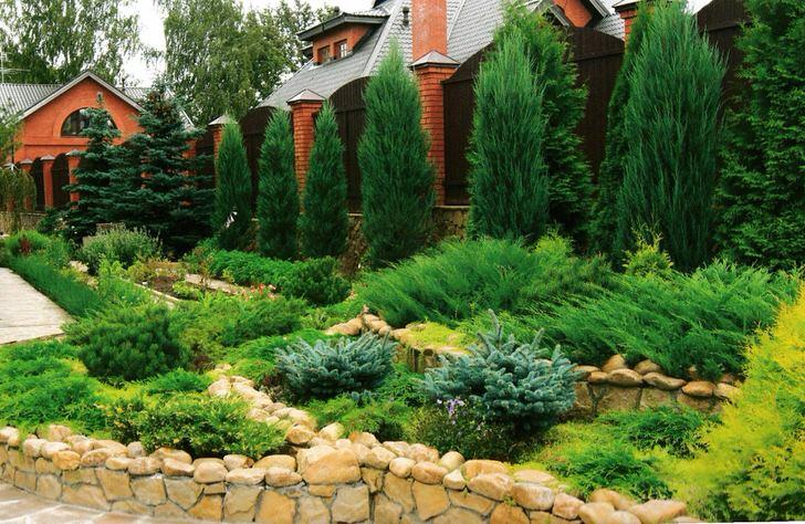 Чудесный пример сочетания в живой изгороди вечно зелёных туи и ели.