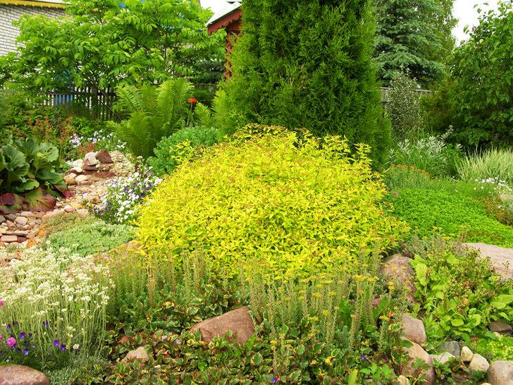 Ненавязчивый по окрасу листьев плотный шар спиреи Голден-принцесс всегда гармонично вписывается дизайнером в ландшафт участка.