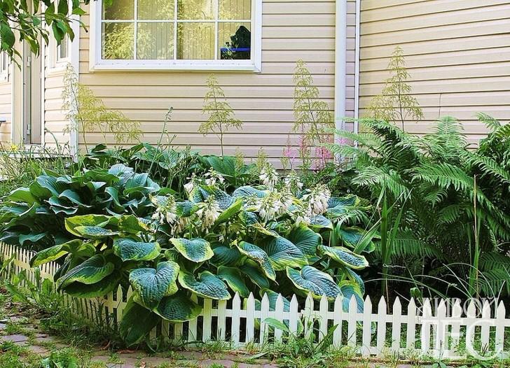 Даже на маленьком, затенённом участке перед домом, можно воссоздать таёжный зелёный островок высадив неприхотливые кустарники папортника, хосты, астильбы.