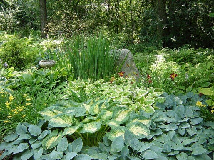 Тенистый участок сада при грамотном выборе кустарников, порадует сочным зелёным островком и спокойными красками цветов.