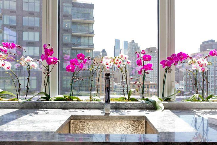 Если вы решили иметь у себя дома капризную красавицу орхидею, основательно изучите рекомендации по уходу за этим нежным цветком.