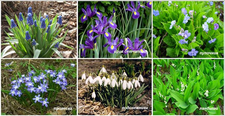 Цветы для затенённого, влажного участка сада.