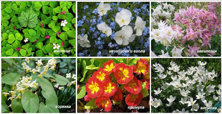 Растения для альпинариев и тенистых участков.