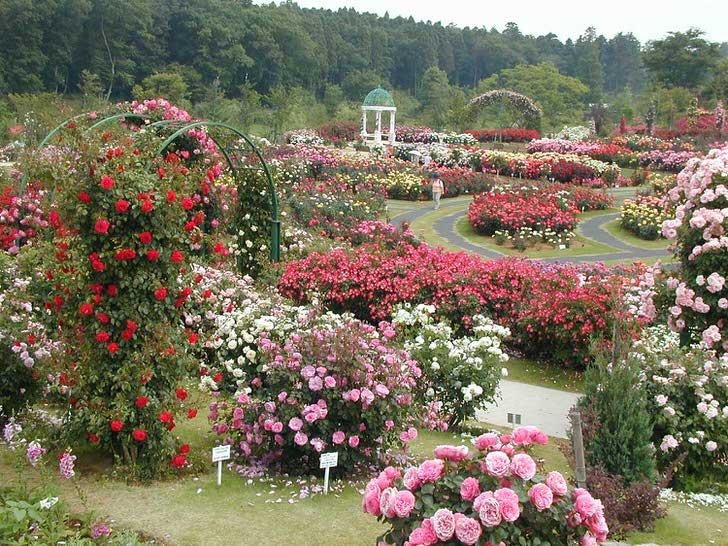 Парк розарий
