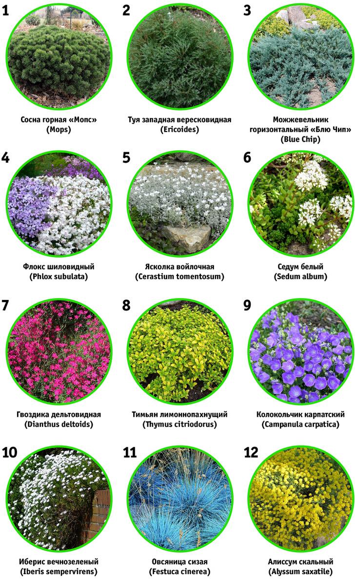 Растения для рокариев