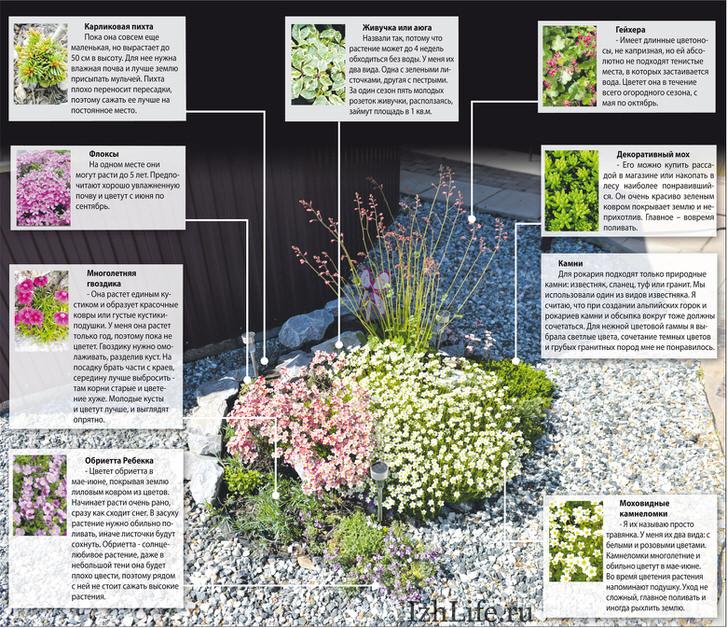 Растения для рокариев.