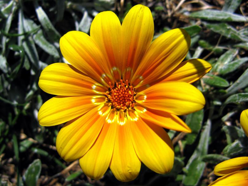 Нежно-желтый цветок